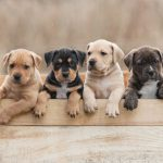 Which Is the Right Breed For You?