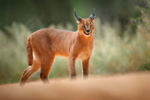 The Wildcats Quiz