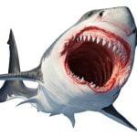 The Classic Film Quiz: Jaws